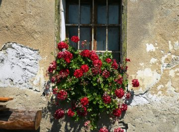 plant-house-flower-window-wall-color-1116139-pxhere.com